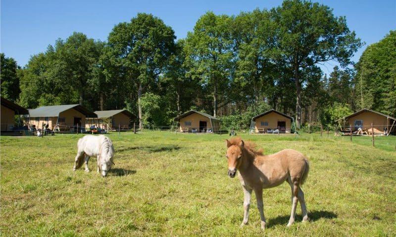 FarmCamps De Bosrand
