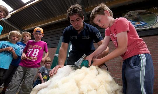 FarmCamps Mariekerke